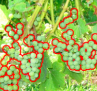 Autonomous Vineyard Canopy and Yield Estimation image